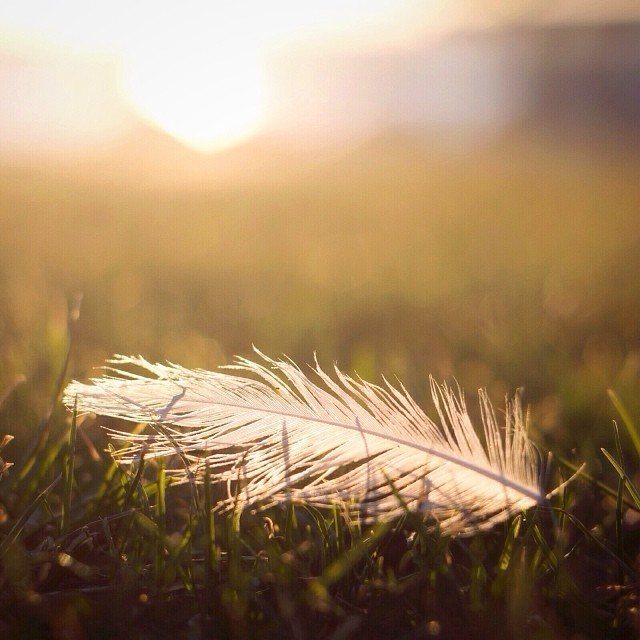 The Golden Shadow – Reclaiming Your Gifts and Your Purpose